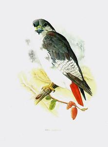 Peter Hobson paintings