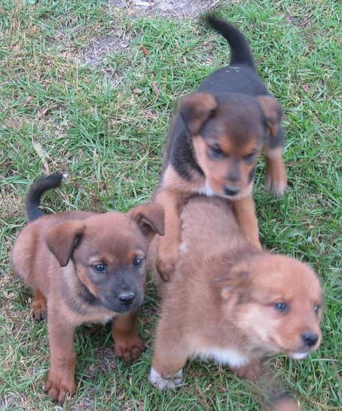 puppy family.JPG
