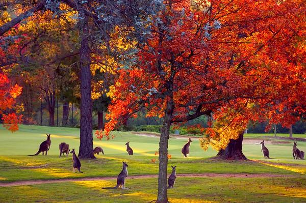 Autumn Canberra