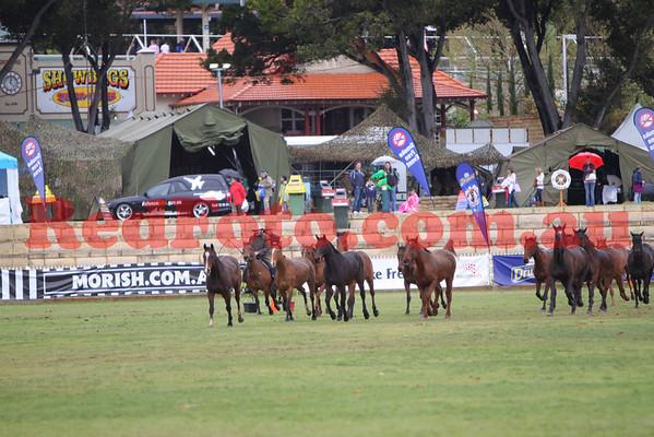 2009 09 29 Perth Royal Show Horse Muster