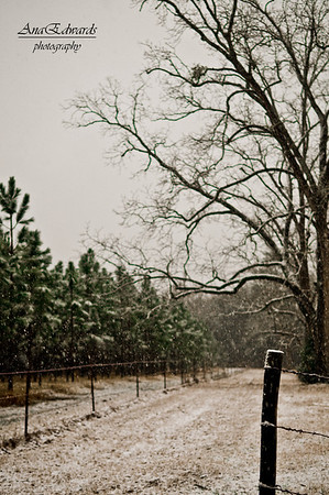 Snowy Georgia 2/12-13/2010