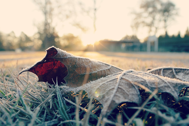 Don't you just love seeing the sun shine down on a frosty December morning?