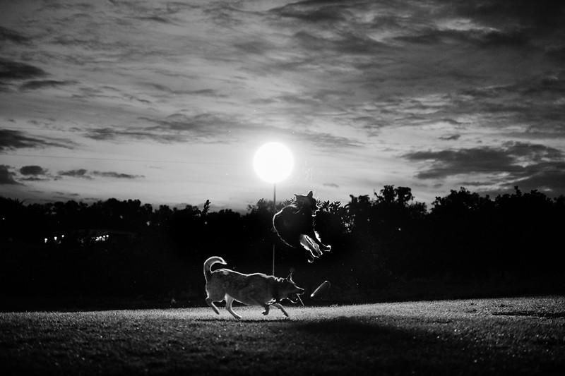 Tori & David dogs (1 of 10).jpg