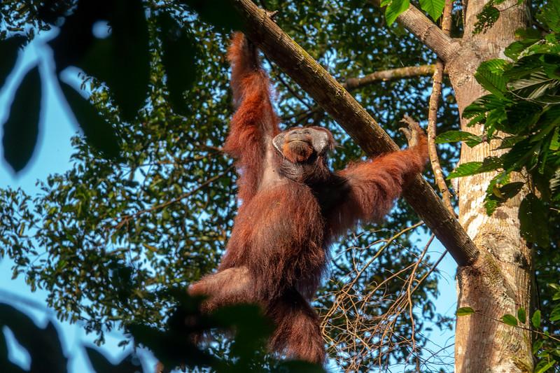 Danum Valley Borneo Rainforest Lodge 5-11-18135135.jpg