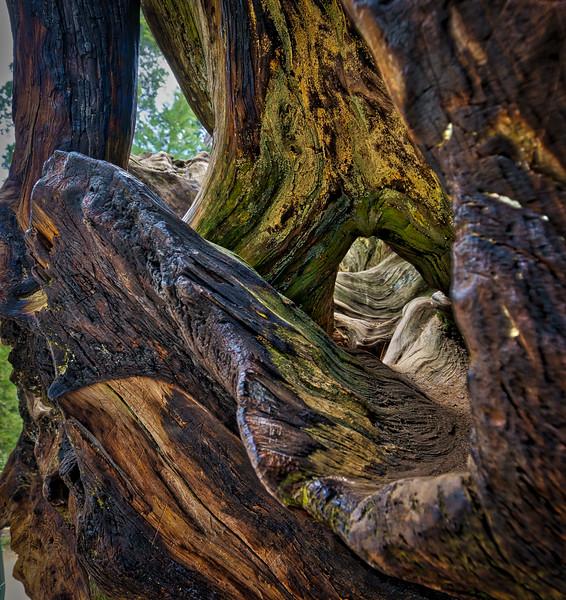 Sequoia -090616-075_AuroraHDR_HDR.jpg