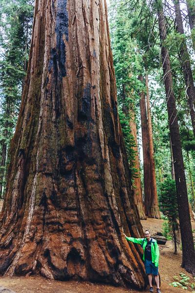 Rui in Sequoia-06941.jpg