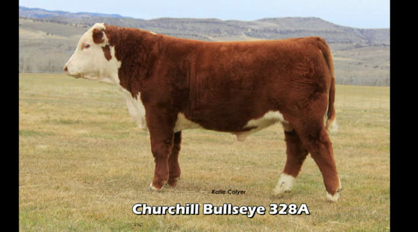 Churchill Cattle Company