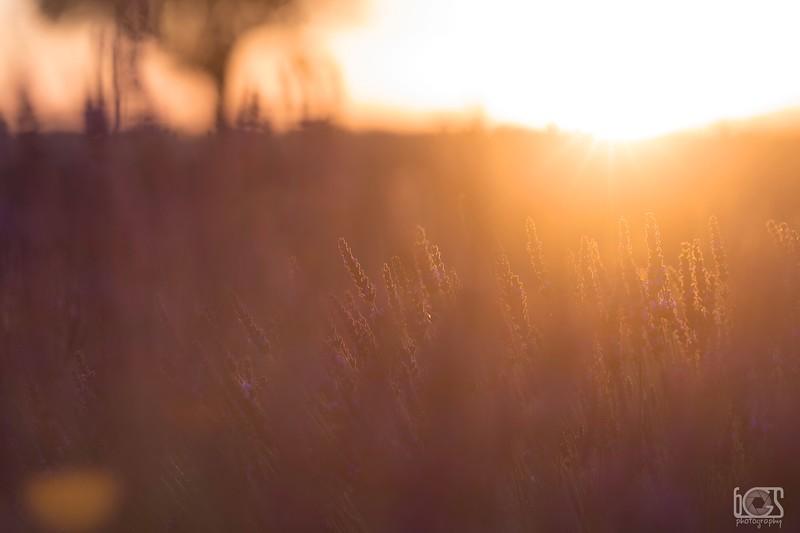 SunriseLavandeBlur.jpg