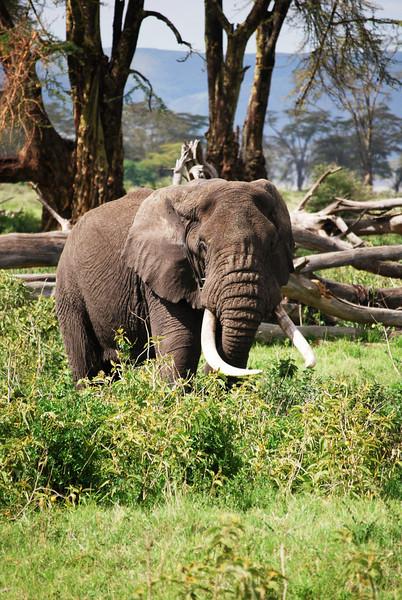 Ngorongoro (283).JPG