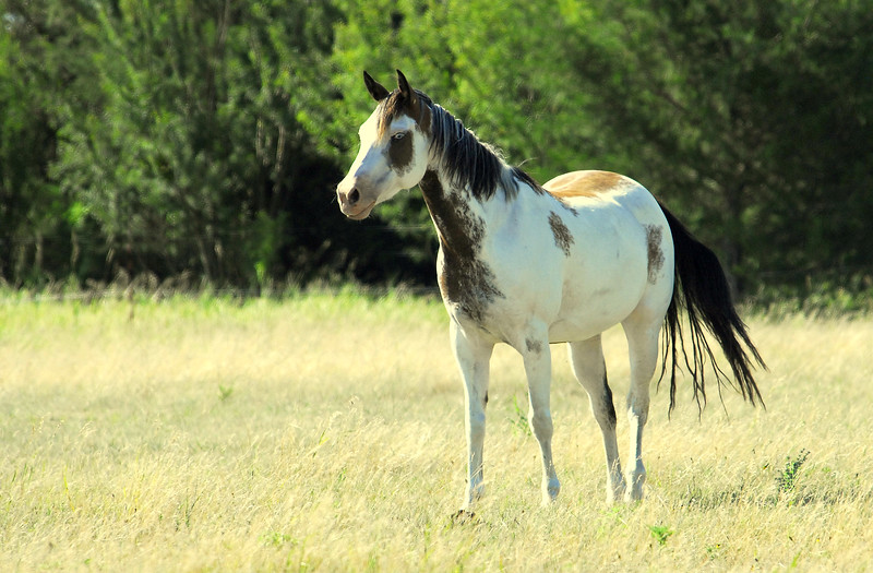 Beautiful Horse with Gray Eyes