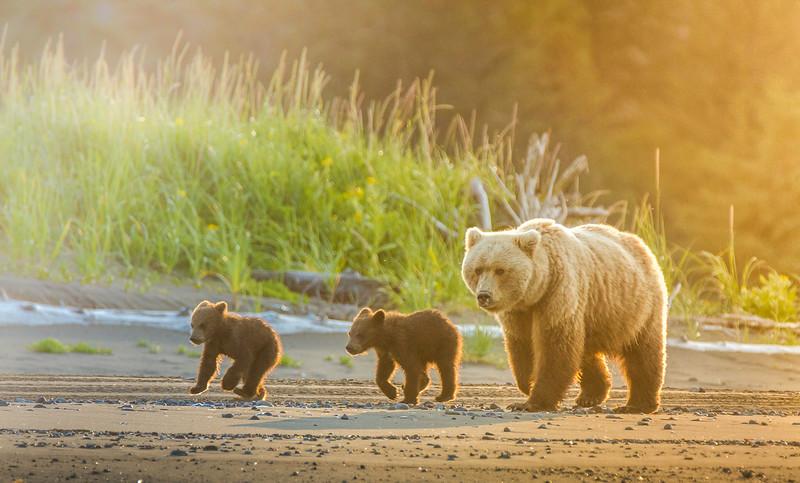 2015-07-18_Bears_Canon7D_7019.jpg