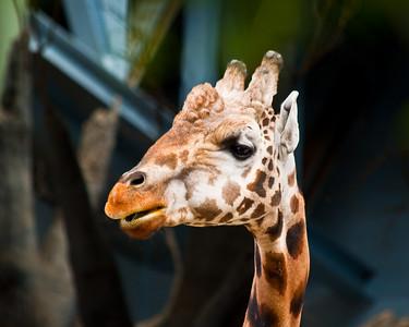 Zoo Shots