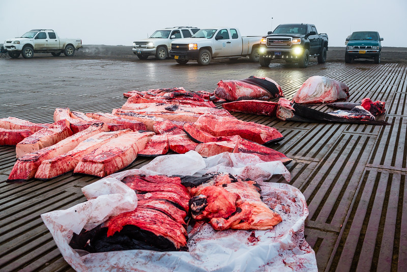 Utqiagvik Whaling-6105095-Juno Kim-nw.jpg
