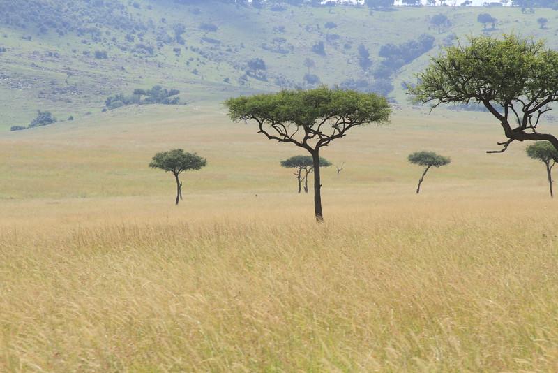 Kenya Part2 '15 885.JPG