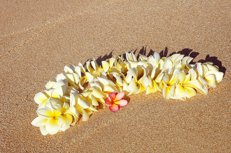 """Yellow and white plumeria lei on the beach with """"aloha"""" written below the one pink plumeria blossom"""