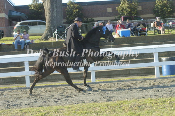 CLASS 19  - 4 YR OLD OPEN SPECIALTY