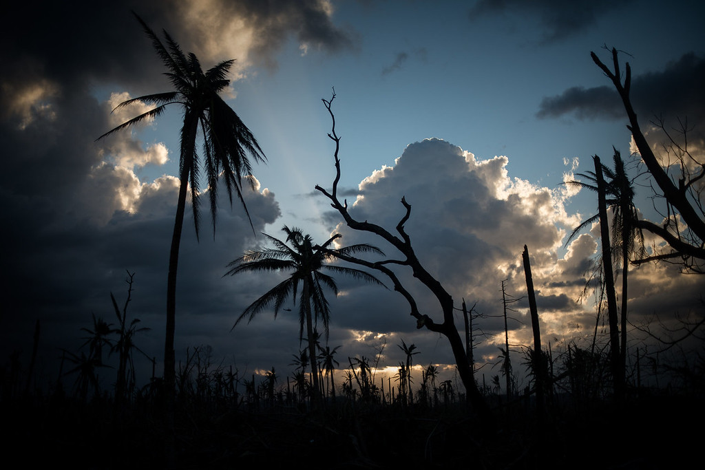. Broken trees and palm trees are seen against the sunset in Tolosa, on the eastern Philippine island of Leyte on November 18, 2013 over one week after Super Typhoon Haiyan devastated the area.  The United Nations estimates that 13 million people were affected by Super Typhoon Haiyan with around 1.9 million losing their homes.     PHILIPPE LOPEZ/AFP/Getty Images