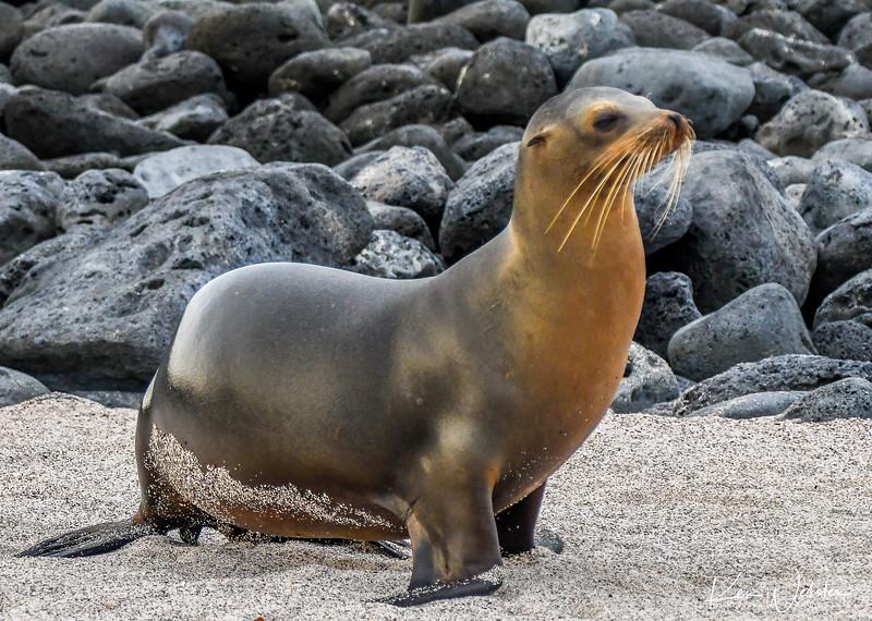 2018 Lobos Island-29.jpg