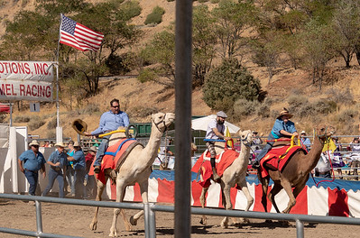 2018 Virginia City Camel Races