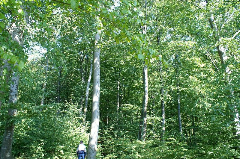 Trelde Landskabspark-0021.jpg