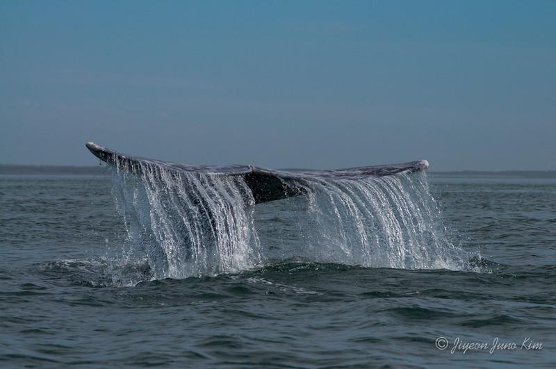 Mexico-Loreto-Whale-2412.jpg