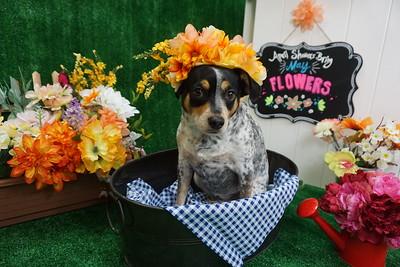 May Floral Photos - 2018