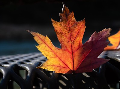 10-19-2018-leaves