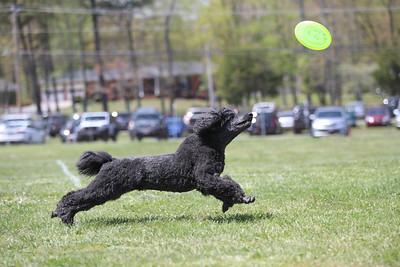 Maryland Dog Fest 4/28/18