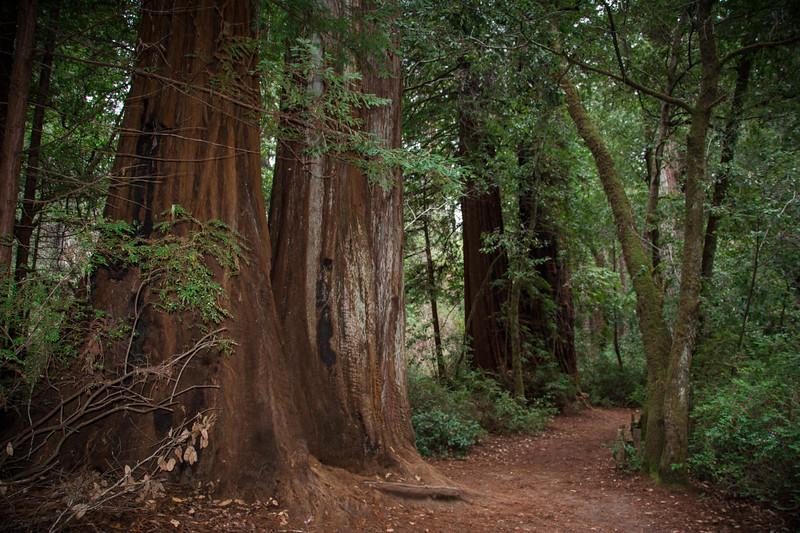 Redwood-47.jpg
