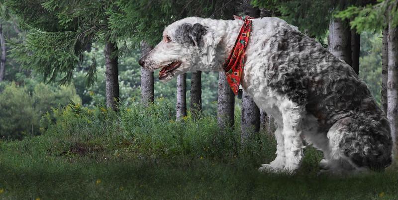dog-woods.jpg