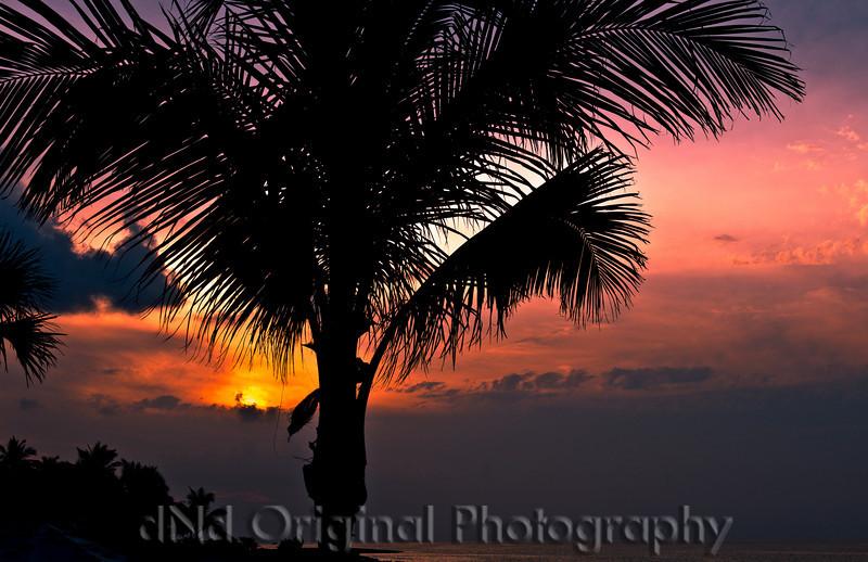 135 Wedding & Dinner - Palm Tree & Sunset.jpg