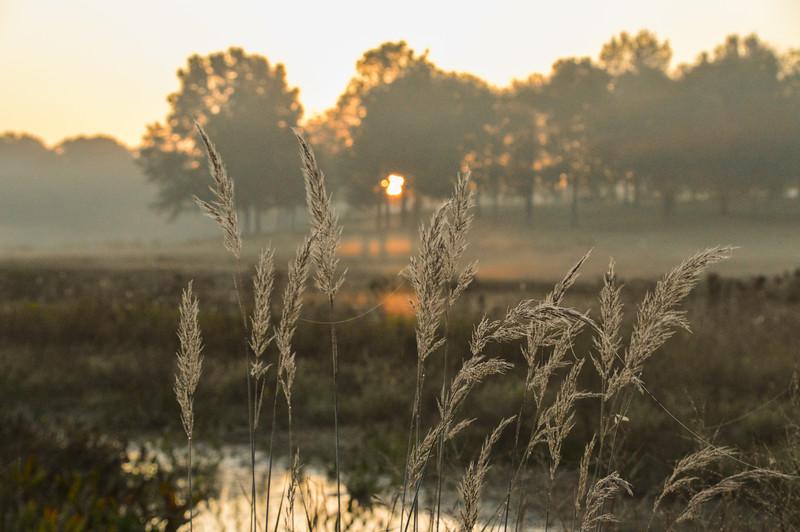 Boetler-Park-Sunrise-Grasses.jpg