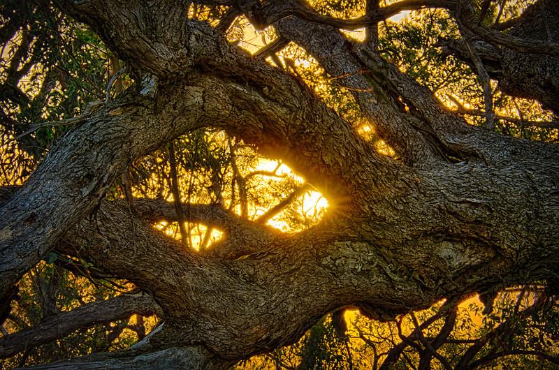 Sunset through the Australian bush