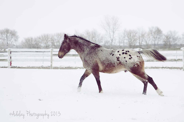 Katie's Horses