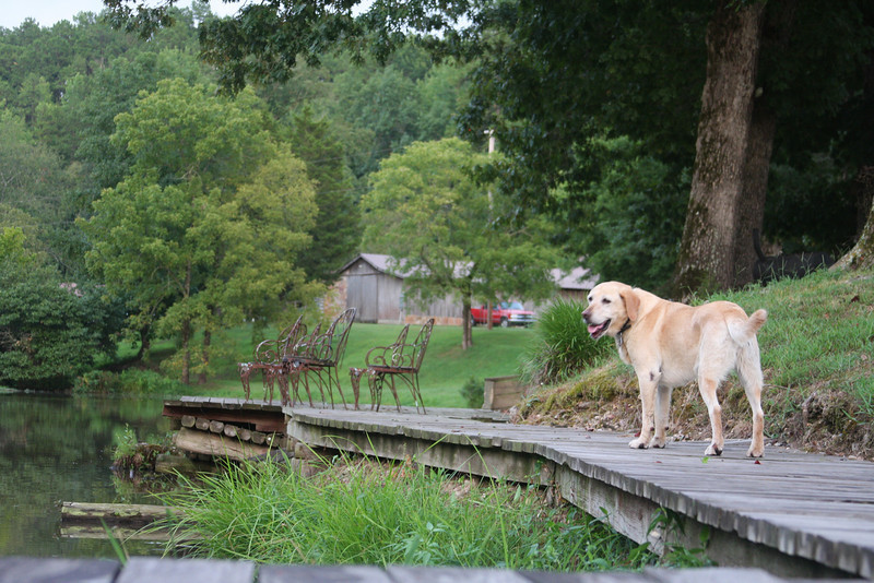 Sadie at Panther Valley Ranch.  She follows you wherever you go which isn't a bad idea as she scares off any undesirable wildlife!