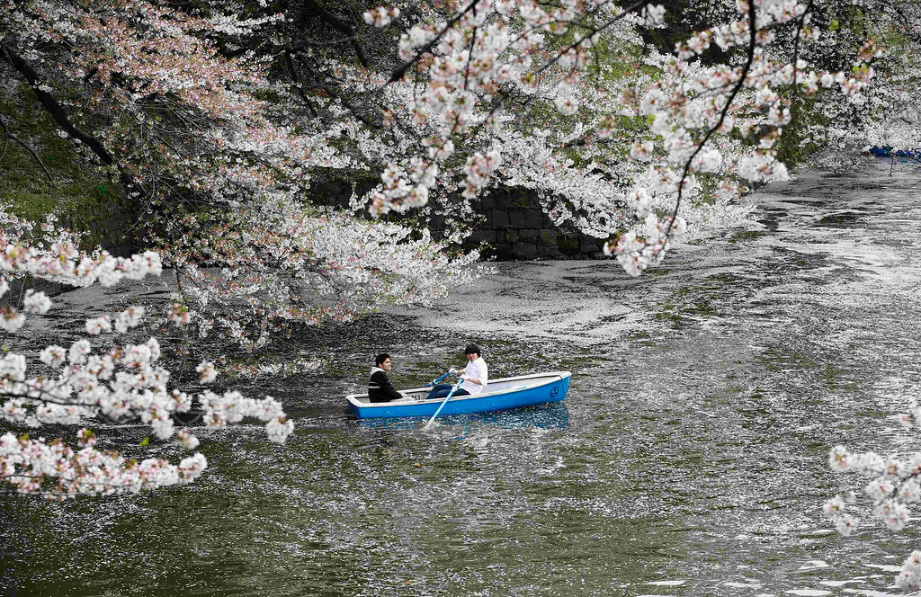 . Visitors ride a boat in the Chidorigafuchi moat covered with petals of cherry blossoms in Tokyo April 1, 2013. Many people enjoy viewing the blossoms all over the country during the spring season. REUTERS/Toru Hanai (JAPAN - Tags: SOCIETY ENVIRONMENT)