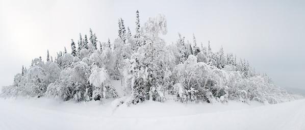 Dawson City 2013