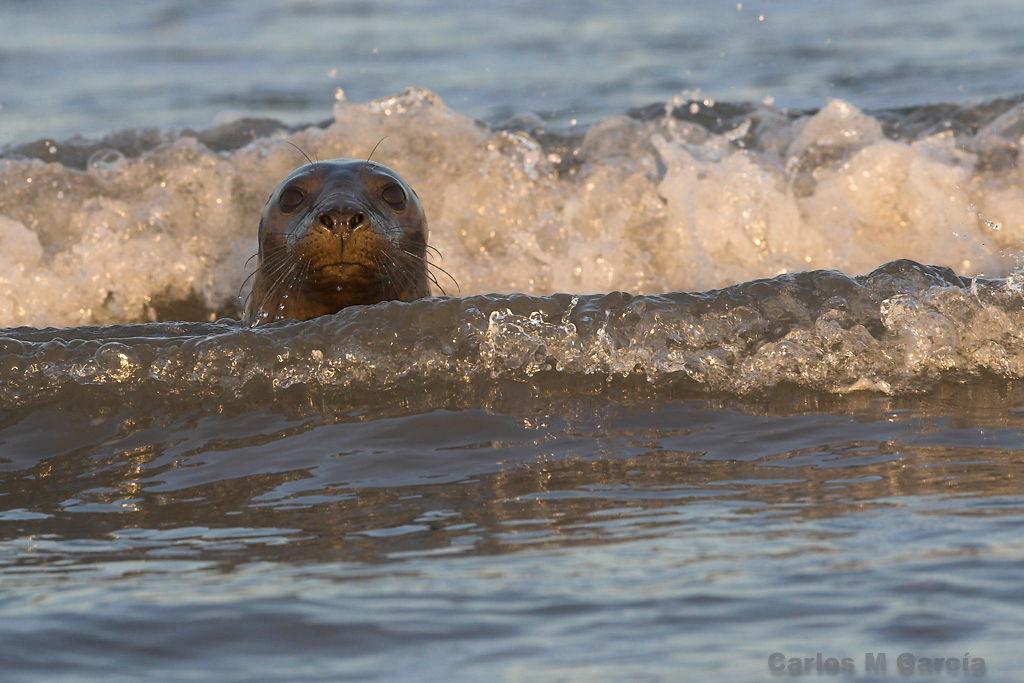 From Grey Seal gallery
