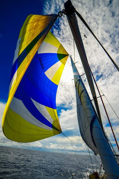 Sailboat sunny spinnaker-2.jpg