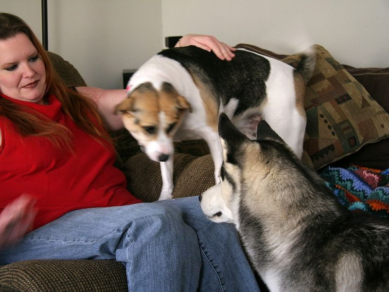 Daisy, our Beagle/Jack Russel mix, was a little jealous, but not too much.