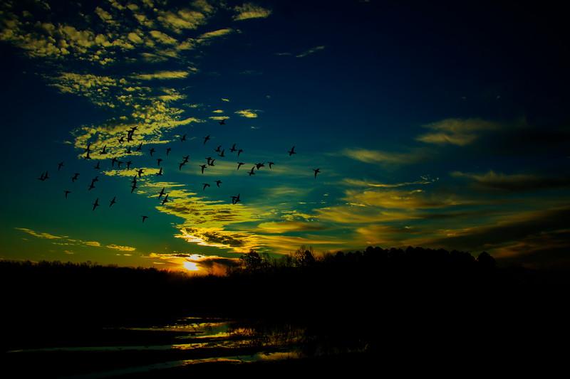 11.16.17 - Beaver Lake Fish Nursery: Green Winged Teal in flight.