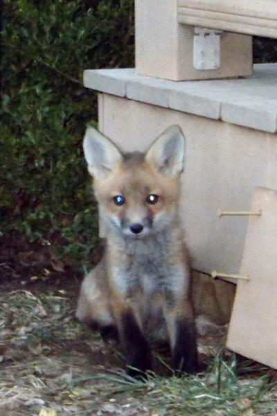 Applegate Fox family