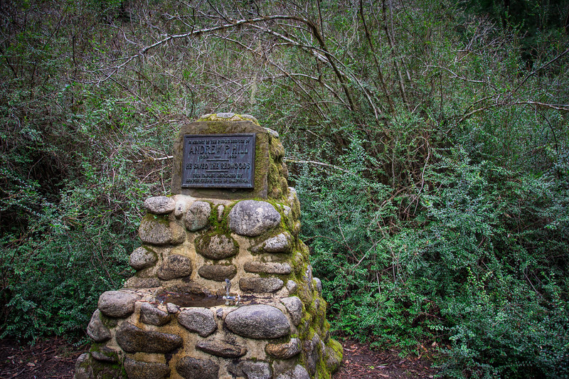 Redwood-44.jpg