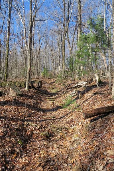 Coldspring Branch Trail -- 2,980'