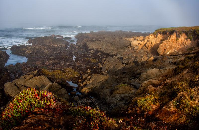 Coastal morning.jpg
