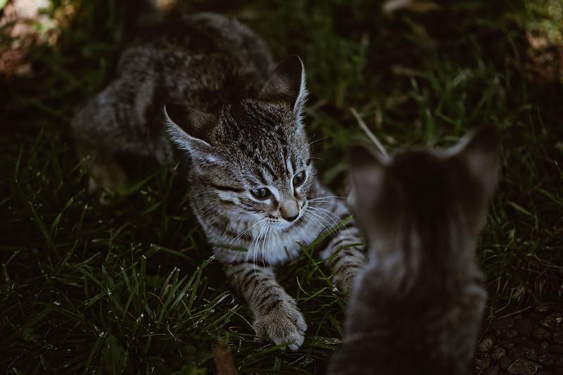 Girls & Kittens, July 1st - 14.jpg