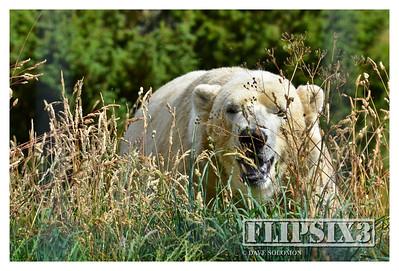 Highland Wildlife Park 2014