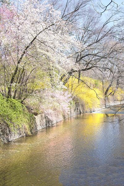Spring at Branch Brook Park NJ