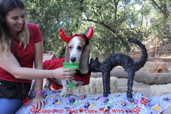 Pup-O-Ween 2015