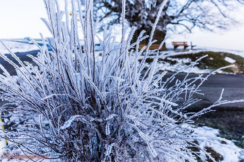 2017-12-07 Winter Boezberg - 0U5A0648.jpg